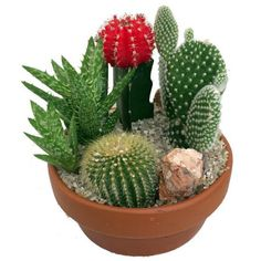 "Cactus & Succulent Garden with Neon Cactus - 5"" Clay Pot - 4 Different Plants Image 2 of 2"