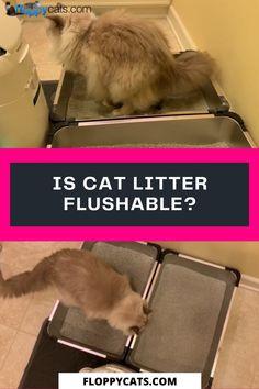 900 Cat Accessories Ideas In 2021 Cat Accessories Cat Collars Cats