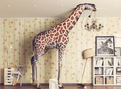Find Giraffe Breaks Ceiling Living Room Photo stock images and royalty free photos in HD. Explore millions of stock photos, images, illustrations, and vectors in the Shutterstock creative collection. Pet Insurance Reviews, Cheap Pet Insurance, Pet Health Insurance, Dog Insurance, Best Term Life Insurance, Life Insurance Companies, Feline Leukemia, Living Room Photos, Fotografia