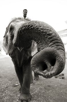 Indian Elephant – Goa India Travel Photography by Realdarrenpb, via Flickr