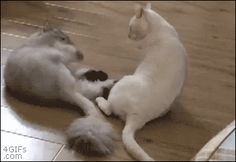 Brutal cat fight. [video]