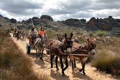 Rock Art and Donkey Carts - Jamaica History, Mode Of Transport, Farm Yard, Rock Art, Wilderness, Donkeys, Horses, Adventure, Travel