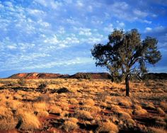 Australie : paysage de brousse.