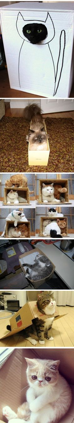 Cats in boxes