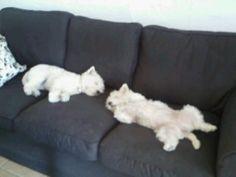 Aggie and Bonnie sleeping