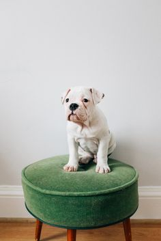 Is there somewhere where I can check a puppy registration for English Bulldog?