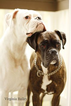 #Boxer Best friends