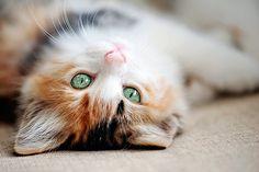 kendrasmiles4u: Kitten with green eyes by Hulya Ozkok on Getty Images