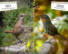 Bird Feeders, Pet Birds, Reptiles, Animals And Pets, Birds Photos, Flora, Insects, Beautiful, Exotic Birds