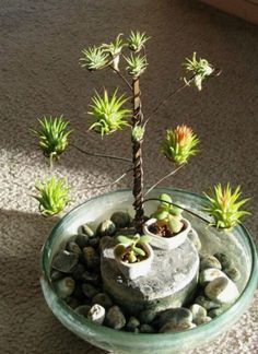 HomelySmart   10 DIY Air Plant Holders For Your Home