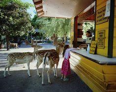 Adorable Girl Loves Animals Like Her Own Siblings - My Modern Metropolis