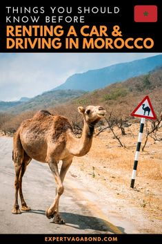 Renting a car in Morocco isn't as scary as it sounds if you follow my tips for a successful road trip. #Morocco #Adventure #RoadTrip #Travel #Africa