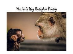 How to Write a Mother's Day Metaphor Poem upwards (lesson plan and power point) Metaphor Poems, Powerpoint Designs, Mothers Day Poems, Ad Design, Teaching Resources, Poetry, Design Inspiration, Writing, Humor