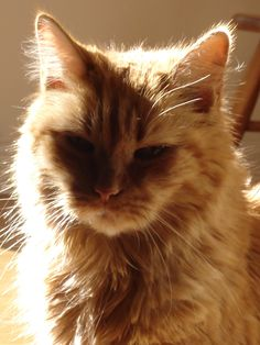 Eddie our orange tabby. Love you and miss you lots buddy.