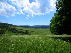 Magical Forest, Mountain Range, Trail Running, Czech Republic, Beautiful Pictures, Southern, Adventure, Mountains, Landscape
