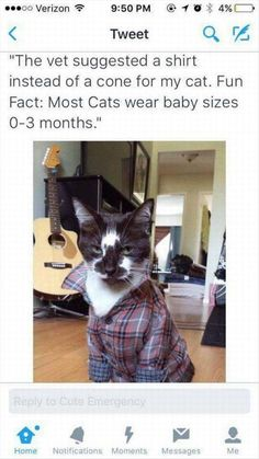 28 Funny Animal Pictures - We love cute pictures of cats, dogs, horses, pigs, cows, lions, and tigers, and bears… OH MY!                                                                                                                                                                                 More