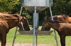 Feed Smart Automatic Horse Feeder