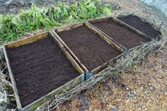 Byta jord i pallkragar - Sara Bäckmo Types Of Vegetables, Growing Vegetables, Raised Garden Beds, Raised Beds, Seed Packets, How To Get Warm, Fast Growing, Garden Projects, Backyard Farming