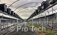 Drip irrigation system for strawberry tabletops Drip Irrigation System, Railroad Tracks, Strawberry, Strawberry Fruit, Strawberries, Train Tracks, Strawberry Plant
