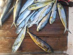 #fish #fishing #fisher