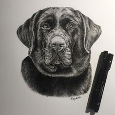 Literally lost count of the amount of hours spent here! Hope his owners love it! ✍❤️ Back to drawing henna patterns and letters tonight  #labrador #portrait #labs #dogs #instadogs #doglovers #labradorssofinstagram #dogstagram #dogportrait #labradorlove #chocolatelabrador #chocolatelab #art #fineliner