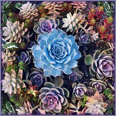 gorgeous plantables