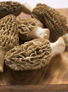 Mushroom Hunting Adventures - Humor and Nostalgia - Capper's Farmer