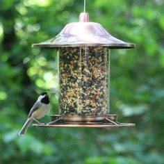Copper Bird Feeder Seed Wild Perch Panorama Tube Metal Hanging Garden Backyard