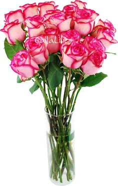 Order beautiful bulk flowers at the best prices. Our fresh Roses Carousel are gorgeous! Bulk Roses, Hot Pink Weddings, Rose Varieties, Carousel, All The Colors, Special Day, Floral Arrangements, Wedding Flowers, Vase