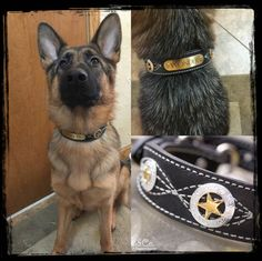 Wonder looks beautiful :)  I wonder if all German Shepherds are this beautiful :)  http://www.kippyandco.com/products/texas-star-black-leather-collar