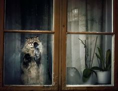 Mysterious window cat (photo by Anna Kryczkowska""