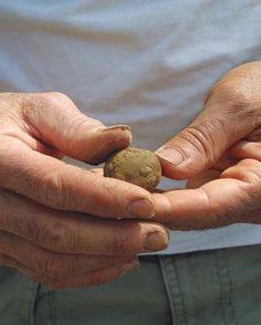 Improving Clay Soils | Fine Gardening