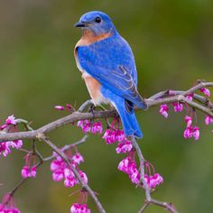 Why Native Plants Are Better for Birds and People | Audubon