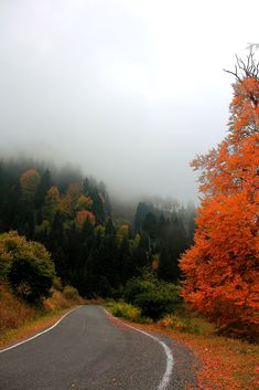 Macka, Trabzon, Turkey