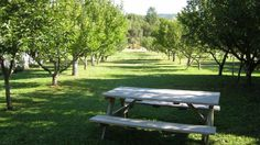 Down on the Farm in Philo : Remodelista