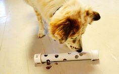 DIY How to Make an Interactive Feeder / Puzzle Toy for your Dogs  #PAW2014