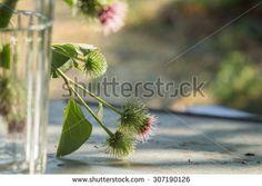 Zdjęcia, obrazy i grafika wektorowa wolne od honorariów autorskich - Shutterstock