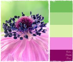purple flower hues
