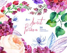 Sweet Poison: 28 Watercolor Elements, hydrangea, roses, poppy, wedding invitation, floral, greeting card, diy clip art, purple flowers