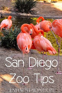 Chronicles of a Babywise Mom: San Diego Zoo Tips