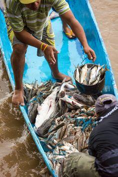 _K0A3618 (www.julkastro.co) by www.julkastro.co (flickr) Tags: travel nature fauna flora colombia fishermen pescado pesca perto pescador travelphotographycolombi