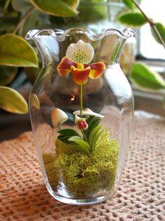 Miniature Sculpted Lady Slipper Orchid Terrarium por MissMossGifts, $26.00