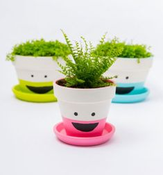 DIY funny face planters with living hair