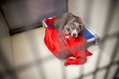ACCT Philly in need of blankets, bedding donations for shelter animals