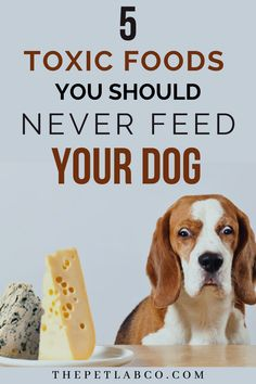 Some human foods are very toxic to your dog's health. And these are the ones to avoid. If you think your dog has had any one of these foods, we recommend contacting your vet and we had some guideline for you. #dogfood #toxicfood #dognutrition #doghealth