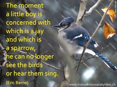 The little boy and the birds