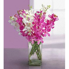 Wedding Gifts Delivery In Bangalore : Gift a plant online in bangalore,Buy plants online in bangalore,Send ...