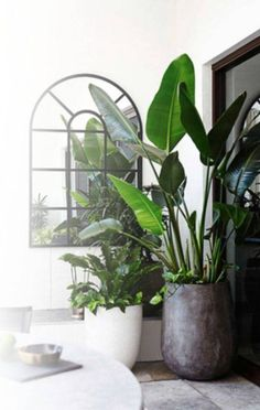 30 Amazing Indoor Garden For Apartment Design Ideas And Remodel. If you are looking for Indoor Garden For Apartment Design Ideas And Remodel, You come to the right place. Below are the Indoor Garden . Interior Design Plants, Plant Design, Garden Design, Zigarren Lounges, Beautiful Gardens, Beautiful Homes, Plantas Indoor, Decoration Plante, Best Indoor Plants
