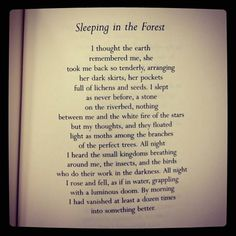 """""""Sleepiing in the Forest"""" by Mary Oliver"""