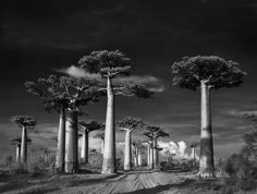 Старые и необычных деревья.